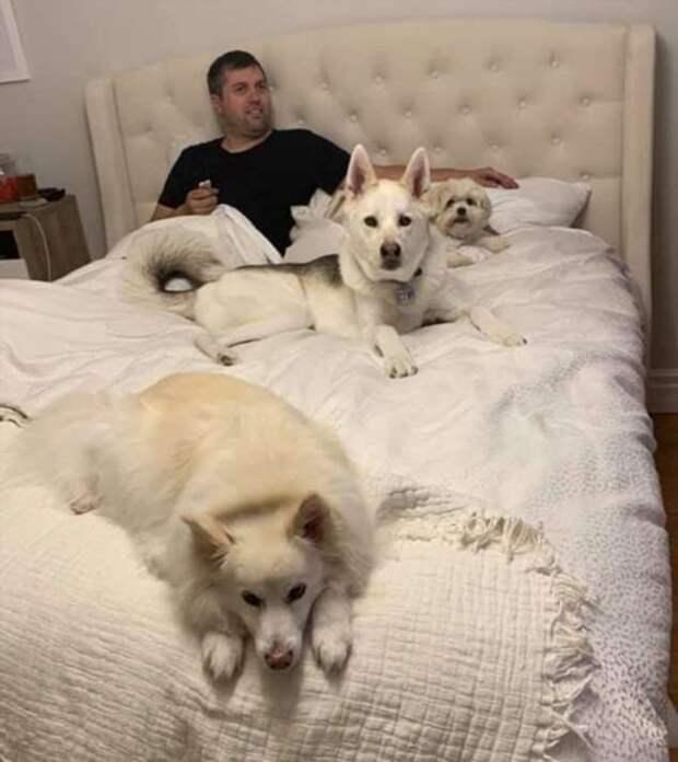 Те, кто не хотели, чтобы в доме была собака