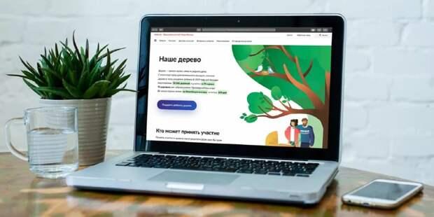 На проект «Наше дерево» подано более двух тысяч заявок / Фото: mos.ru