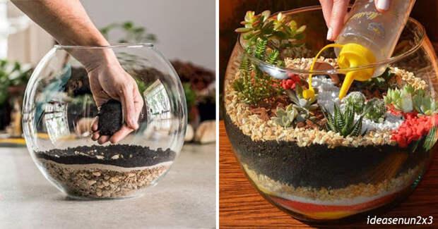 Вот как сделать шикарный флорариум из обычного аквариума