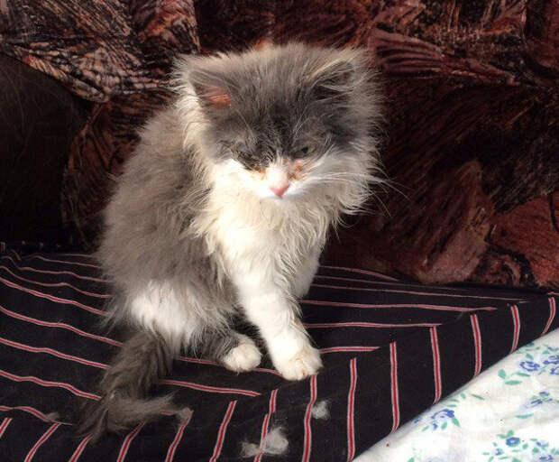 Кошку-найдёныша вылечили и подарили ей счастливую жизнь! Так держать ;)