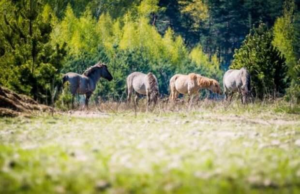 Что такое ревайлдинг и как он влияет на экосистемы