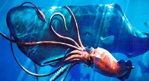 Самые большие кальмары в мире достигают 14-метровой длины. Почему мало кто видел их живыми?