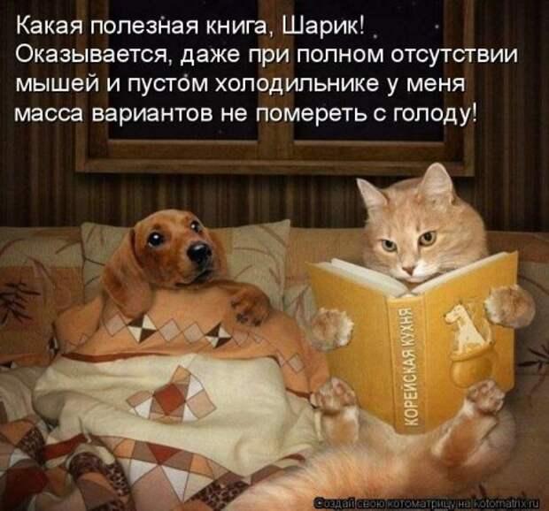 1451492479_kotomatritsa_l