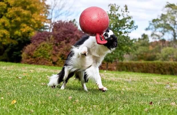 Кто точно принесет мячик: 8 самых послушных пород собак которые понимают с полуслова