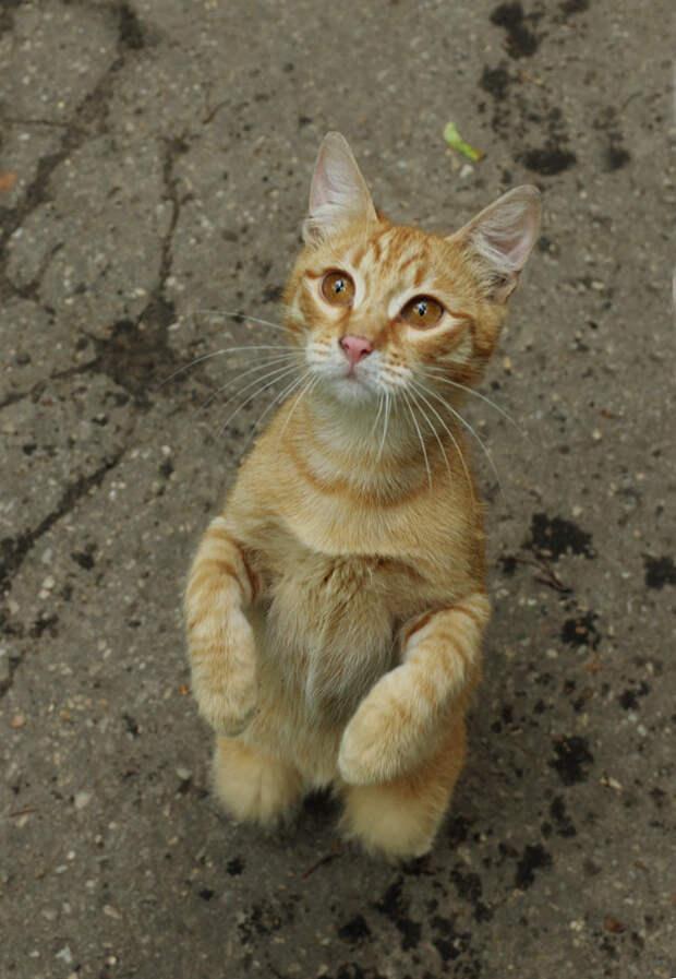 Уличные рыжие котята  хотят стать домашними