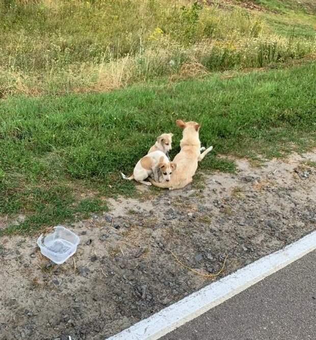Поймать собачью маму удалось только после того, как девушка отчаялась это сделать и заплакала