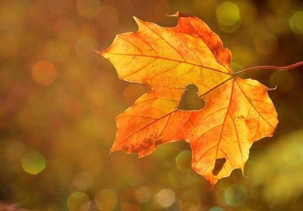 Чем вы любите заниматься осенью больше всего? – новый опрос