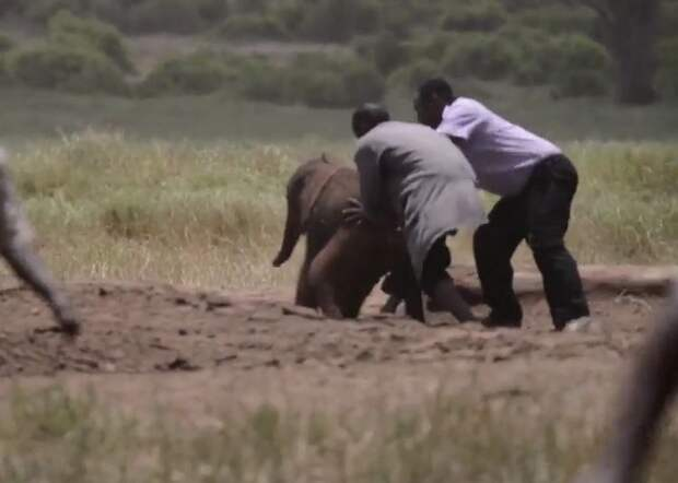 Трогательное спасение слоненка