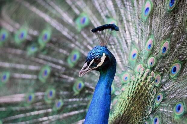 zivotnye za mai 2014 1 ned 21 Лучшие фотографии животных со всего мира за неделю