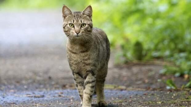 Кошка идет домой