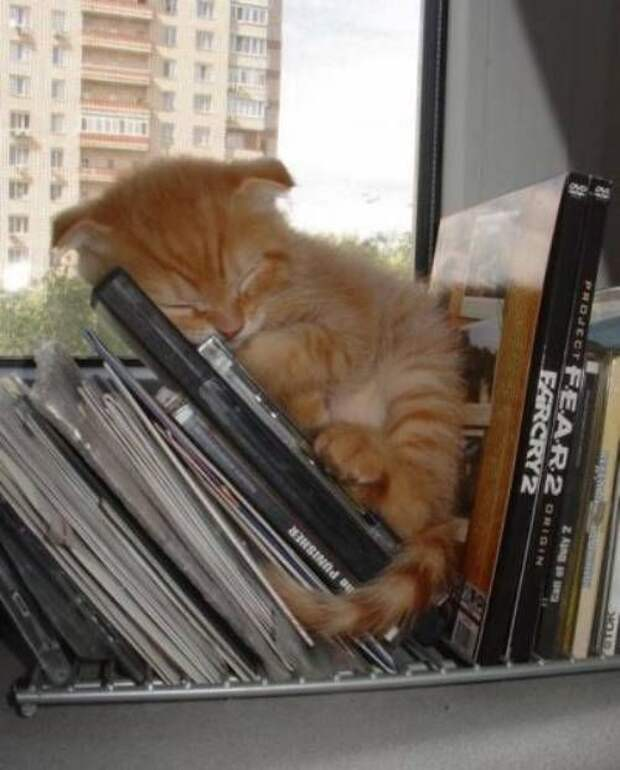 Котики которым все пофиг (12 фото)