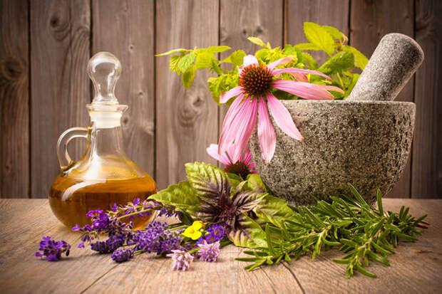 Растения - хорошие помощники в борьбе с зимними недугами