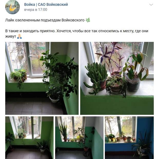 Фото дня: «зеленые» подъезды Войковского района