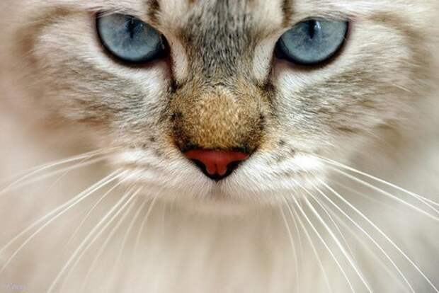 """Кот - """"Батон"""", держит в страхе всех обитателей дома"""
