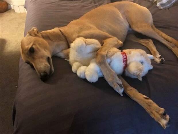 Лечебный пес: собака, которая меняет жизнь больных детей борзая, домашние животные, животные и дети, служебная собака, собака - друг человека, собаки, специальная, терапия