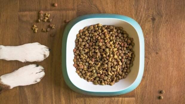Привычные для человека продукты могут серьезно навредить здоровью собаки