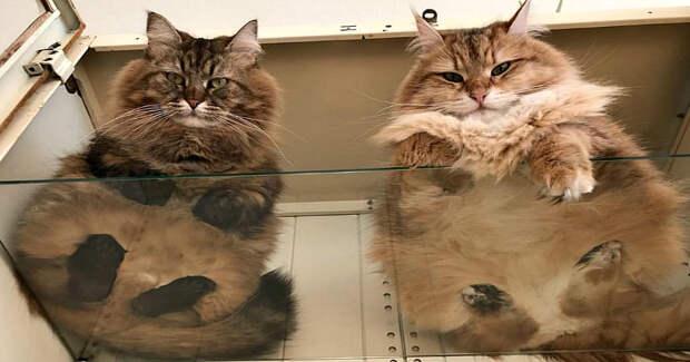 Пятки, пузики и шерсть: убойная доза милоты — котики на стекле, видснизу
