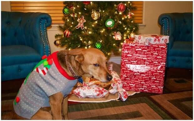 Вы нарядили елку, но кот решил, что нужно раскидать все шарики с новогоднего дерева?