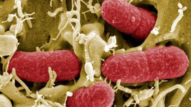 Ученые из США нашли метод борьбы с супербактериями