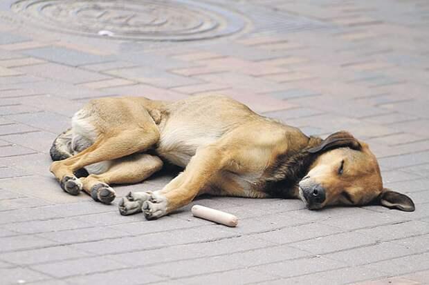 Собака, спящая на боку, всегда готова резко вскочить Фото: Сергей ГАПОН