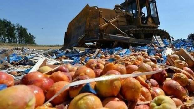 Зачем уничтожать санкционные продукты, если их можно раздать?