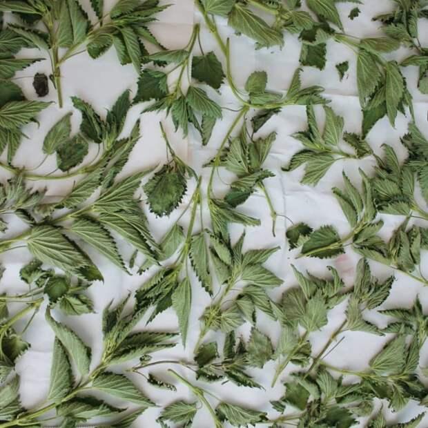 Лучший травяной шампунь — из крапивы