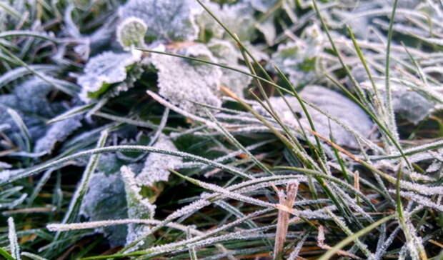 Синоптики предупреждают оренбуржцев о ночных заморозках