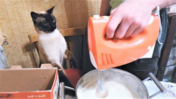 Прикольные видео с котиками и собаками ( коты телефонисты и кулинары )