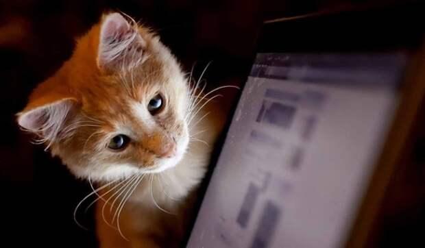 Топ 5 типов интернет-зависимости