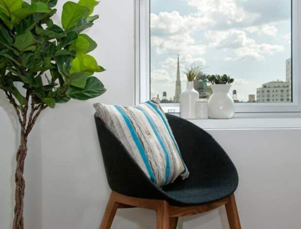 кресло и фикус