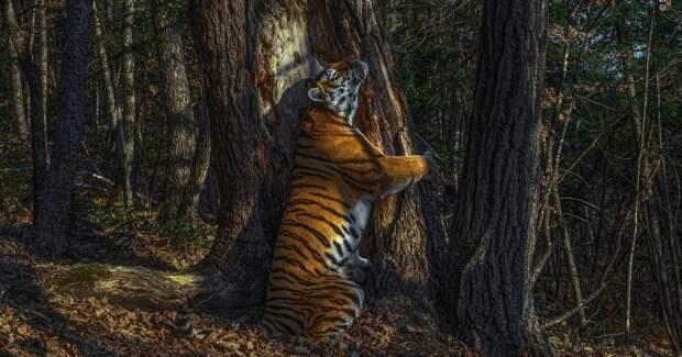 Конкурс на лучшего фотографа дикой природы показал призёров и назвал победителя 2020 года — им стал россиянин