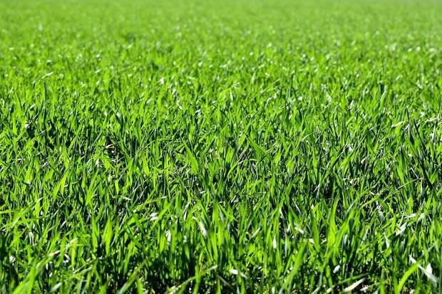 Плохим газоном во дворах недовольны 70% опрошенных в Некрасовке