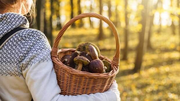 Новые правила сбора грибов, ягод и березового сока раскритиковали в Госдуме
