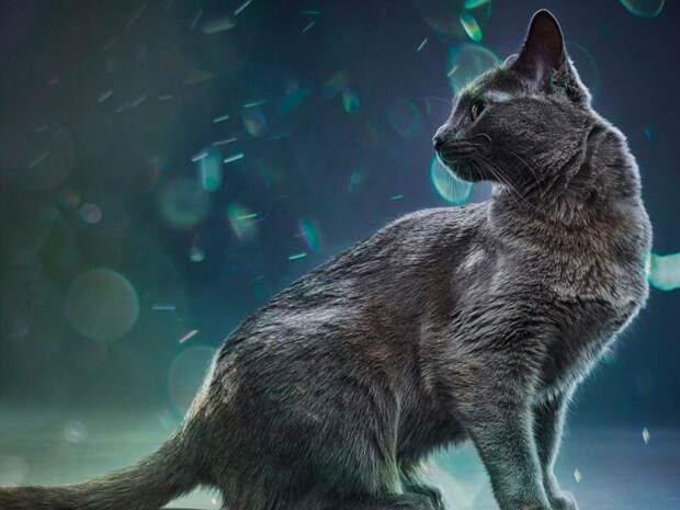 Нестыдные вопросы про аллергию на кошек