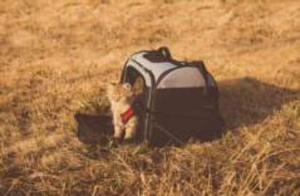 UTair разрешила возить котов и собак на пассажирских креслах