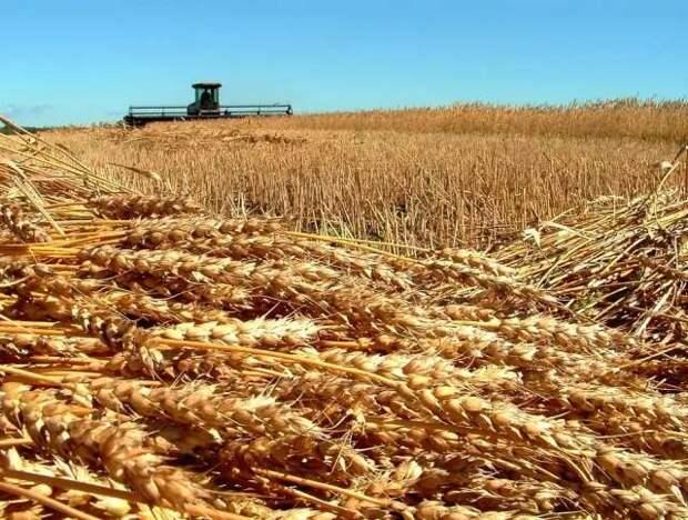 Скандал с семенами ГМО в Поволжье