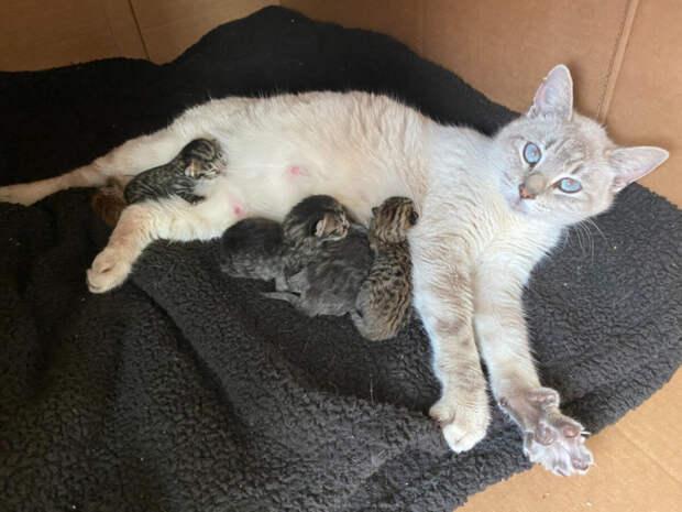 котята, тофу, кошка
