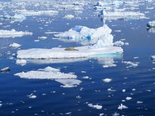 """Биологи нашли в Арктике """"маленького монстра"""" с плоской головой"""