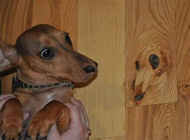 Кажется, собака тоже это видит.