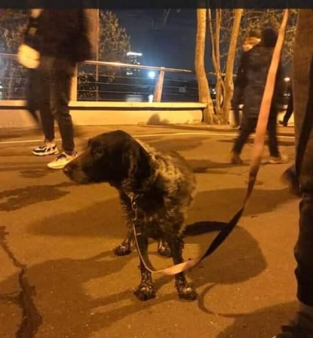 В Северном Тушине спасли собаку, упавшую в канал имени Москвы