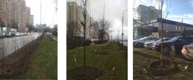 Живые изгороди начали высаживать во дворах Выхина-Жулебина