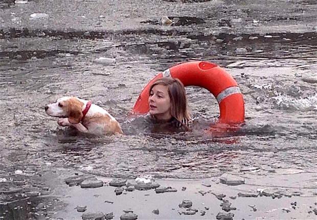 Спасение пса из ледяной воды британия, животные, лондон, собака, спасение, спасение собаки