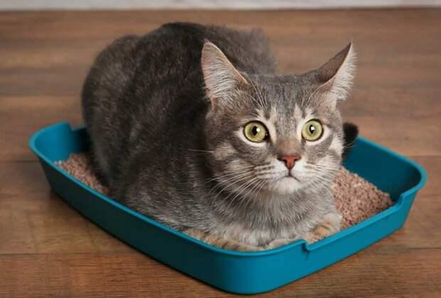 На запах кошачьих испражнений влияет множество факторов / Фото: litter-boxes.com