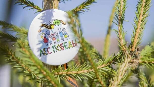 Деревья в рамках акции «Лес Победы» в Подмосковье будут высаживать до 20 мая