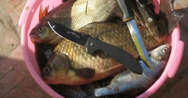 Как почистить рыбу от чешуи: 7 способов