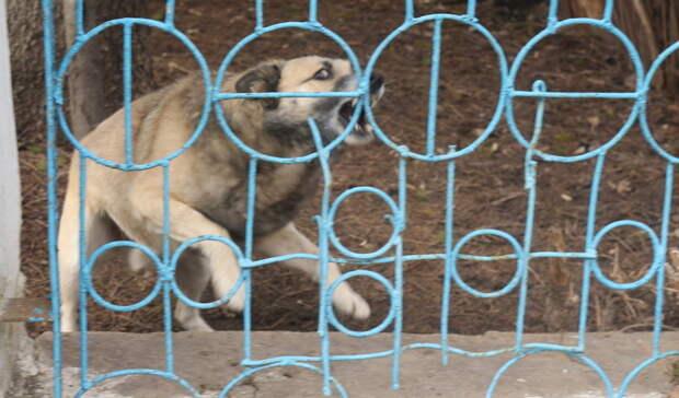 Под Белгородом обнаружили очаг бешенства животных
