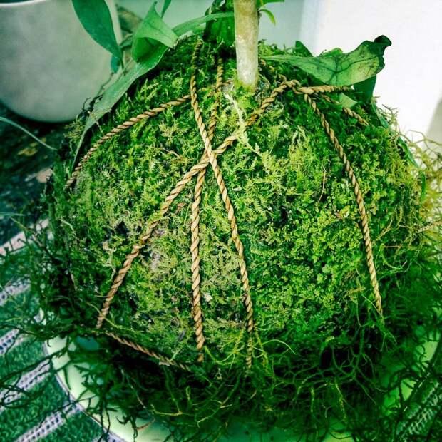 домашние растения картинки