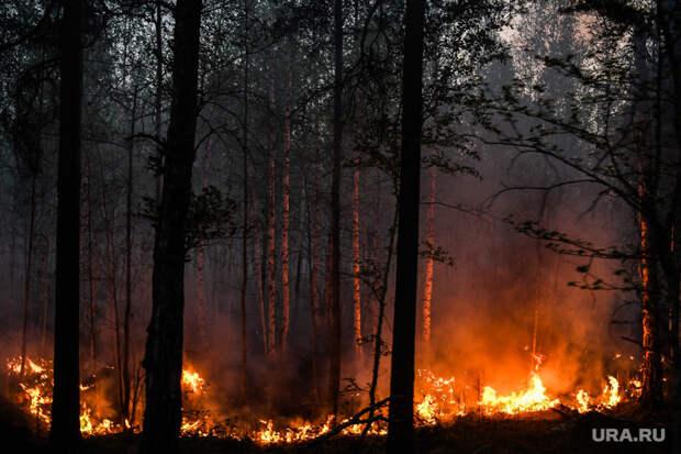 ВЯНАО вспыхнули два лесных пожара