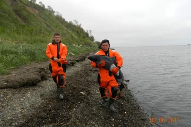 На Сахалине спасатели вернули дельфиненка в родную стихию