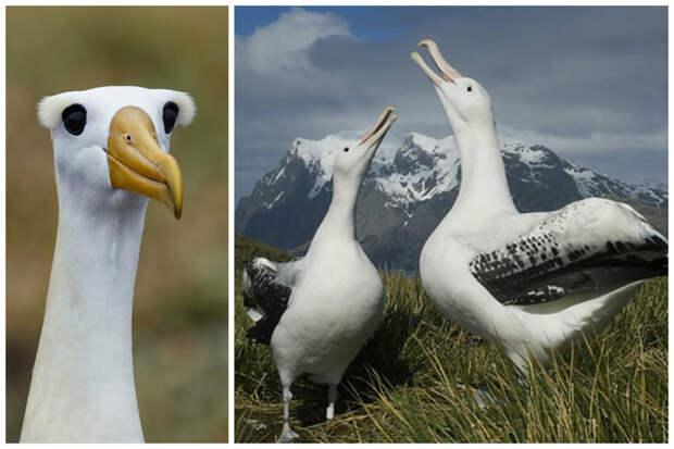 15 самых крупных птиц мира! Это вам не какие-нибудь колибри…))